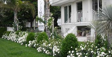 Resort Olympus **** - Residence Alba Adriatica